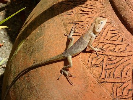mimicry: Desert lizard on amphora
