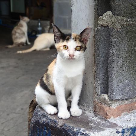 tricolor: Homeless tricolor kitten