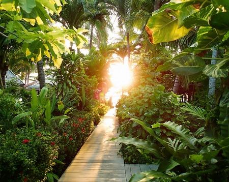 Morning sunlight in greenery, pathway in tropic jungle