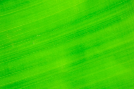 banana leaf background Stock Photo
