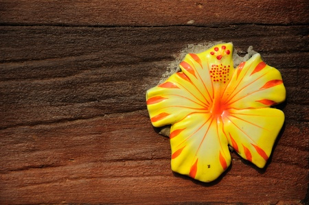 Fower on a wall. Texture background  Stock Photo - 8971553