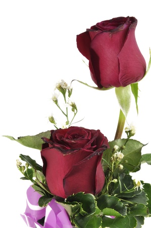 red roses isolated on white Stock Photo