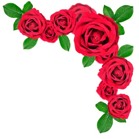 Red roses pattern isolated on white background