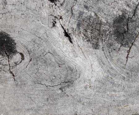 Texture of tree stump.