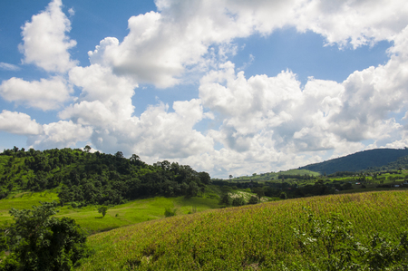 Green field and mountains with cloudy and blue sky. at Flora Park ,Wangnamkeaw - Nakhon Ratchasima , Thailand.
