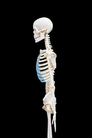 Half-length portrait of human skeleton isolated on black background.side view