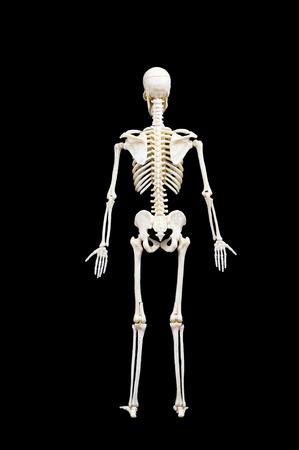 Full length portrait of human skeleton isolated on black background.back view