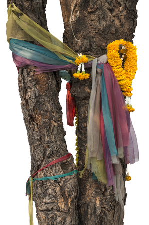 Seven colors fabrics tie with & marigold garlands on tree. This is showing respect of local god/ghost. Religious beliefs of Thai people. isolated on white background with clipping path from selection.