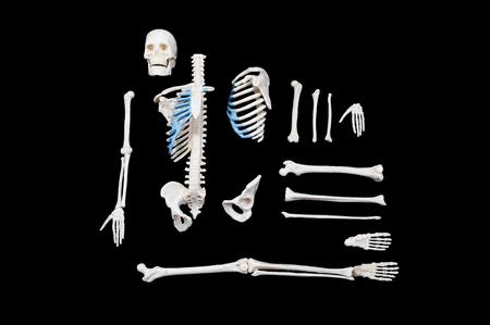 Skeleton composition isolated on black background.