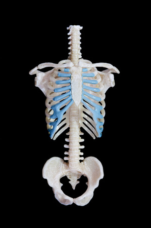Rib cage of a skeleton. Isolated on black background. Banco de Imagens