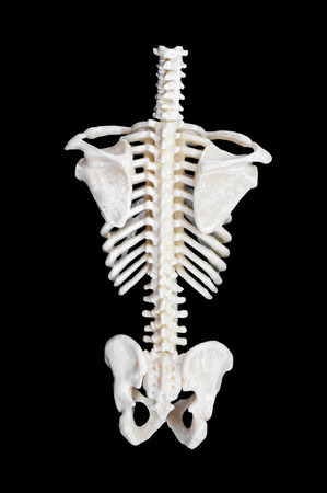 Spine of a skeleton. Isolated on black background.