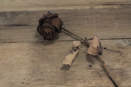 Dried rose on wooden board. Banco de Imagens - 57260489