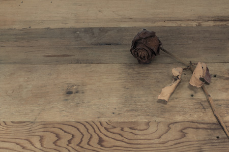 Dried rose on wooden board, Valentines Day background.