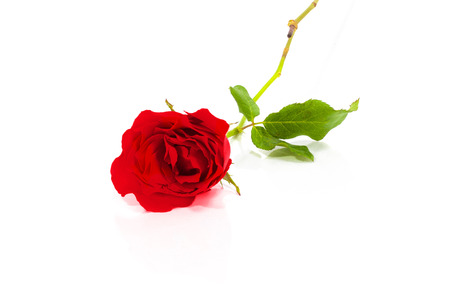 Red rose on white background. Banco de Imagens - 57260516