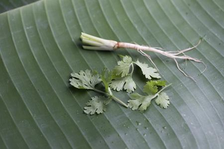 coriander on banana leaf