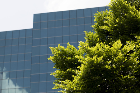 View of glass building through trees Stock Photo