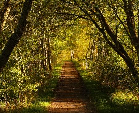 wonderfull: A wonderfull sunny autumn day