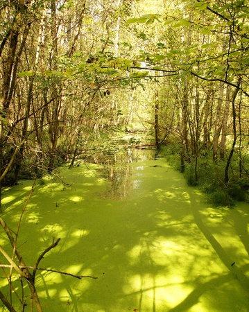pflanzen: The return of the green hell in Northern Europe