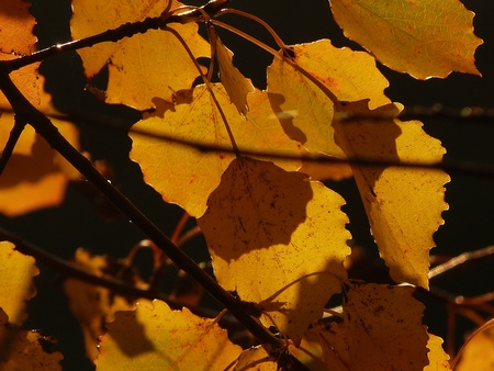 Sommer: Autumn leaves at sunset