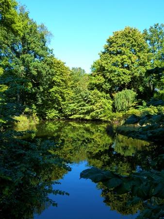 spiegelung: Ein netter kleiner Teich im Sonnenlicht - Ein netter kleiner Teich im Sonnenlicht