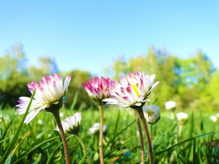Some daisies staring at the sun  Standard-Bild