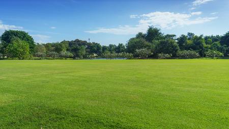 Champ vert avec arbre en ciel bleu