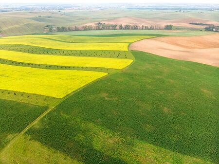 Colorful fields in Moravia