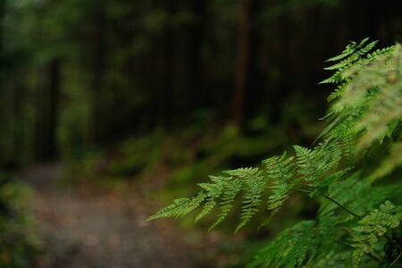 Path in dark forest