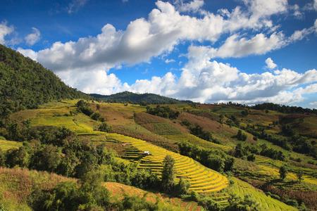 Terrasvormig padieveld in Chiangmai, Thailand.