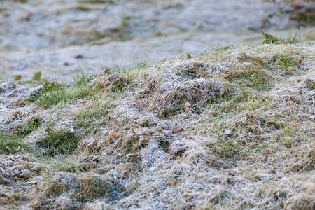 een gras bedekt met rijp.
