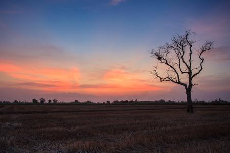 Barren rice fields during sunset.