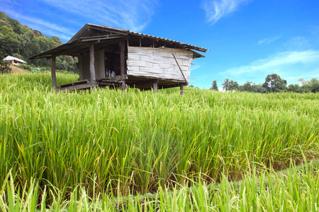Old farmer house in the green terraced rice field on the mountain in Chiangmai, Thailand