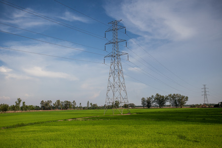Power line on rice farm.