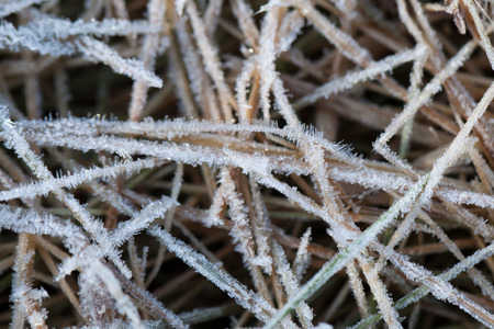 a grass covered with hoarfrost.