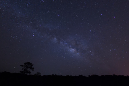 Milky way over the forest.