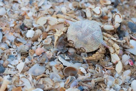 Droge dode krabben op het strand.