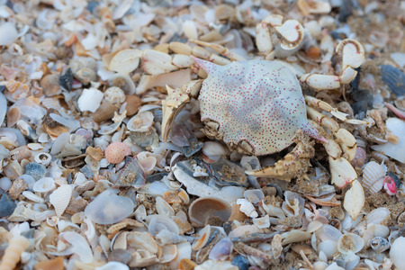 Dry dead crabs on the beach.