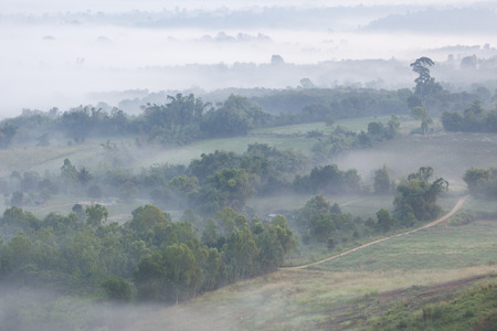 De schoonheid van de mist in het bos. Stockfoto