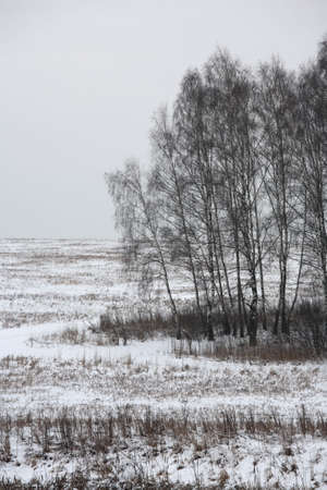 Winter landscape with birch trees on an overcast day, vertical composition. Moscow, Russia. Stock Photo - 6118104