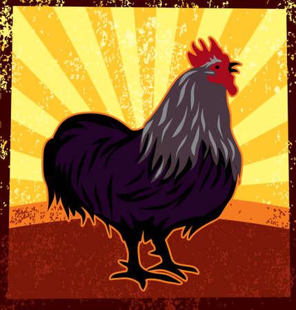 animal cock: Ilustraci�n vectorial de un gallo cantando en la ma�ana.