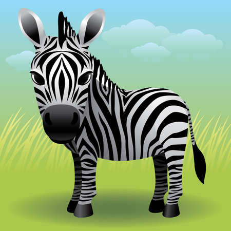 Baby Animal collection: Zebra Stock Vector - 4264042