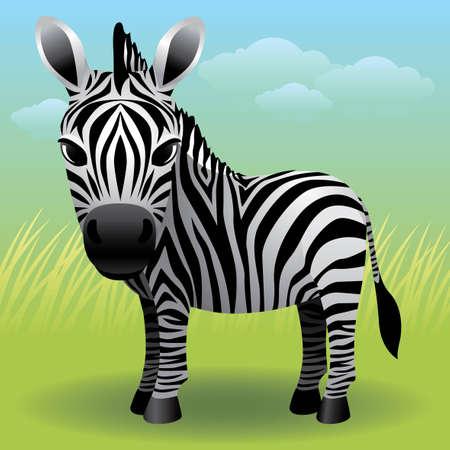 Baby Animal collection: Zebra Illustration