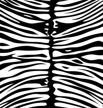 Zebra wallpaper print Vector