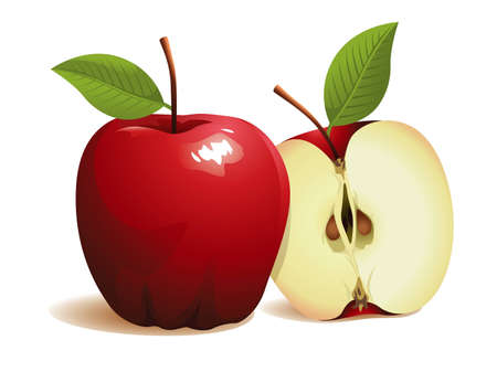 Apple Fruit, realistic vector illustration