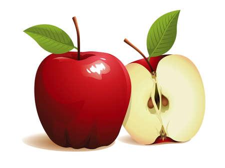 Manzanas, ilustración vectorial real Foto de archivo - 11002675