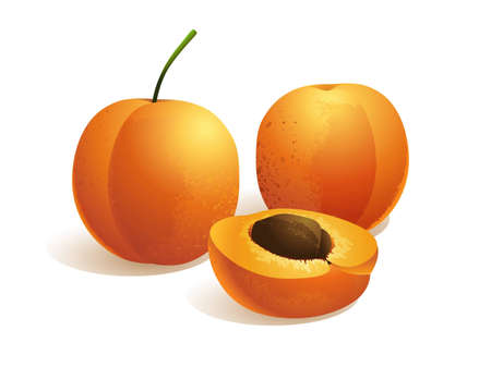 apricot jam: Apricot Fruit, vector illustration Illustration