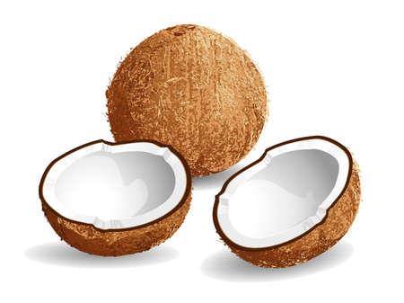 aceite de coco: Ilustración vectorial realista de un coco y mitad cocos.