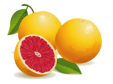 Ilustración vectorial realista de pomelo rosa y un medio pomelo.