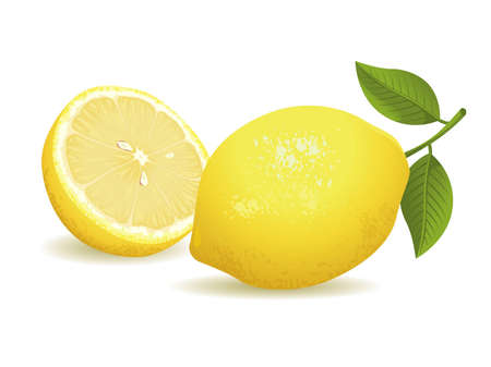 citrus: Realistic vector illustration of a lemon and a sliced lemon.