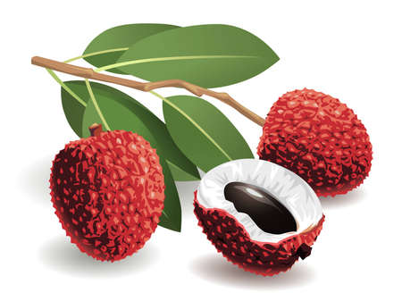 Realistic vector illustration of a bunch of lychees and a peeled lychee.  Иллюстрация